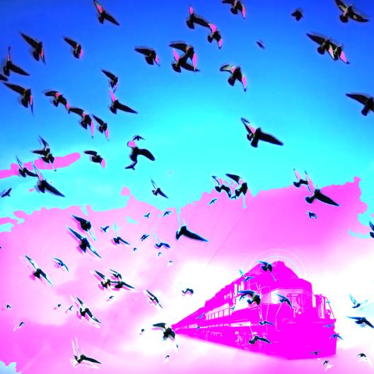 chants-migratoires_still_01